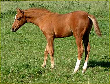 Foal by Small-land Extra Time